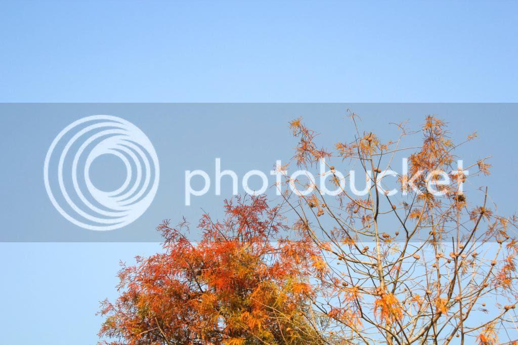 photo IMG_4091_zps0c9f5486.jpg