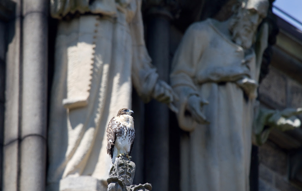 Cathedral Fledge
