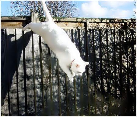 iso-8859-15''Porqué los gatos tienen siete vidas CURIOSIDADESCURIOSAS