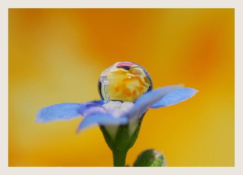 Капля и цветок