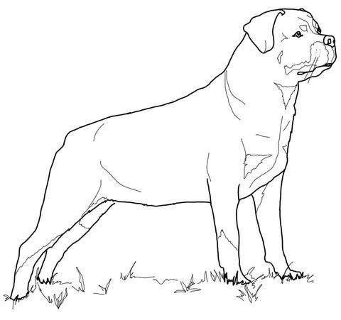 Dibujo De Rottweiler Para Colorear Dibujos Para Colorear Imprimir