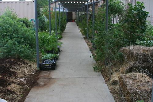 school garden great walk from class to class