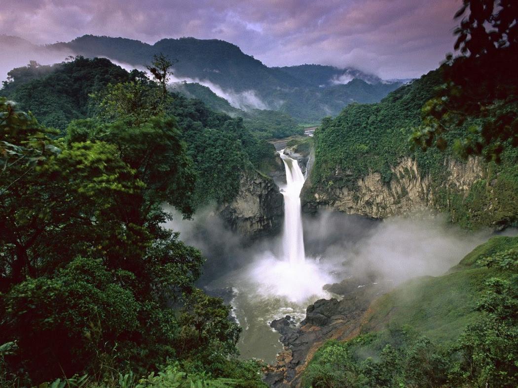 Risultati immagini per foresta dell'amazzonia