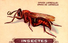 insecte 8