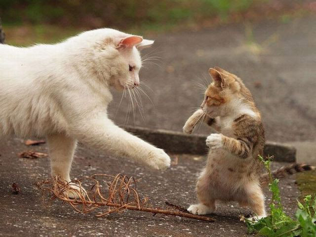 Cute And Funny Cat Pictures Amo Images Amo Images