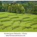 Detusoko rice terraces