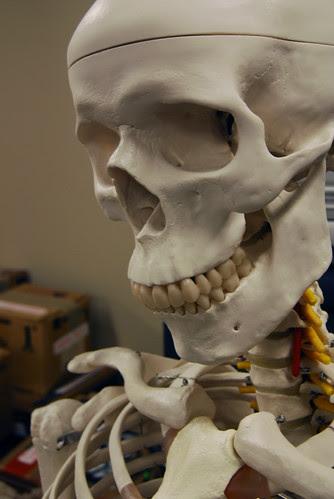 skeleton by thatoliverguy.