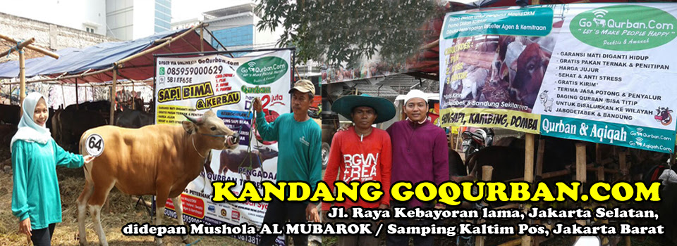 Banner Jual Beli Kambing - desain spanduk keren