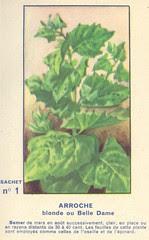 legume arroche