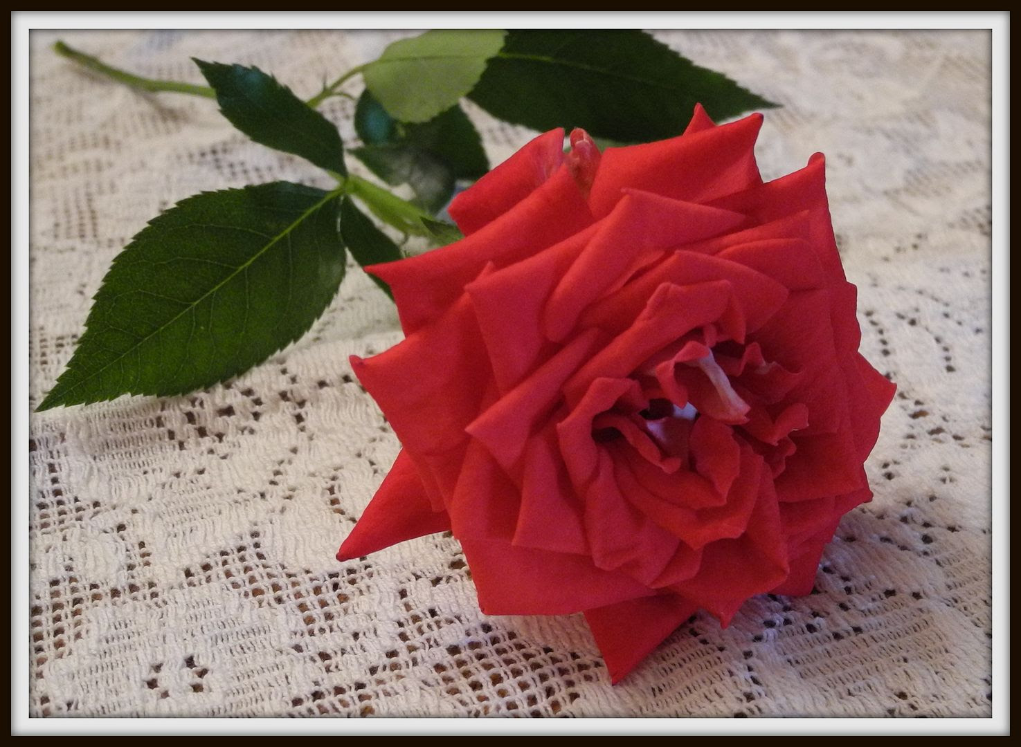 Monique The Rose, by Angie Ouellette-Tower for godsgrowinggarden.com