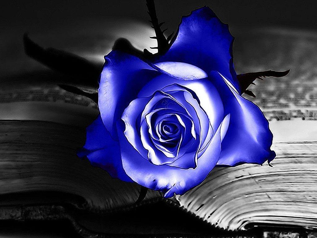 Rosa Azul En Un Libro Imágenes Y Fotos