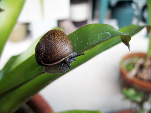 snail_2