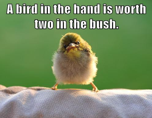 Bird Quotes Bird Sayings Bird Picture Quotes