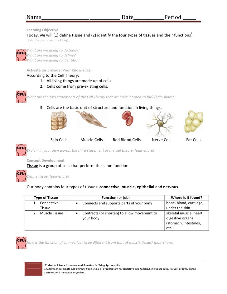 33 Types Of Tissues Worksheet Answers   Worksheet Resource ...