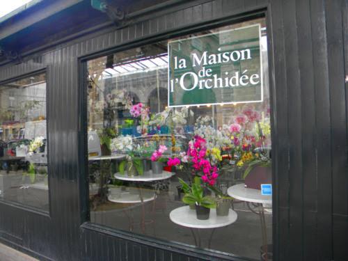 paris orkide dükkanı kendin dik