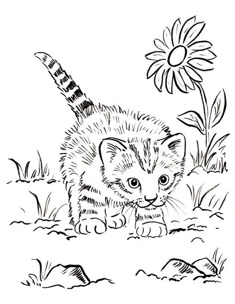 kitten coloring page art starts  kids