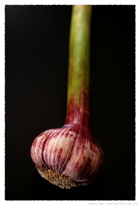 new-season garlic© by Haalo