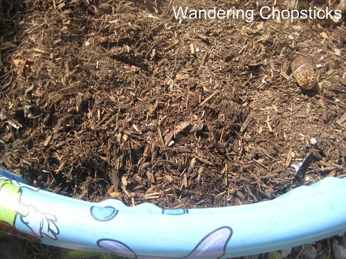 How to Make a Kiddie Pool Raised Bed Garden 4