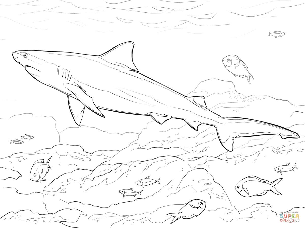 Realistic Bull Shark coloring page | Free Printable ...