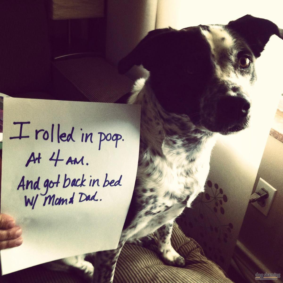 dog shaming 11 32 Hillarious Public Shaming of Dogs