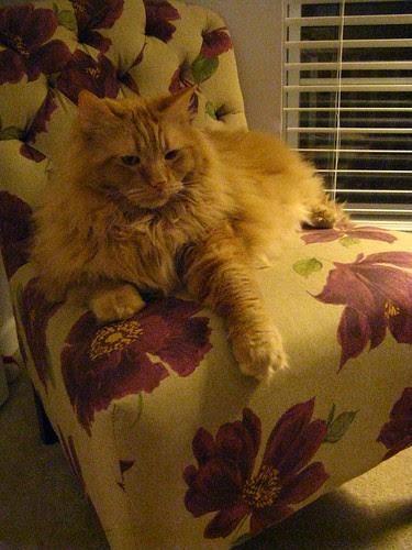 Jasper inspecting the new chair