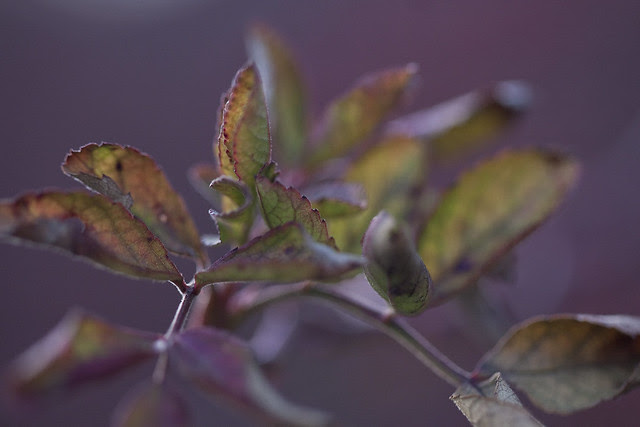 January leaves