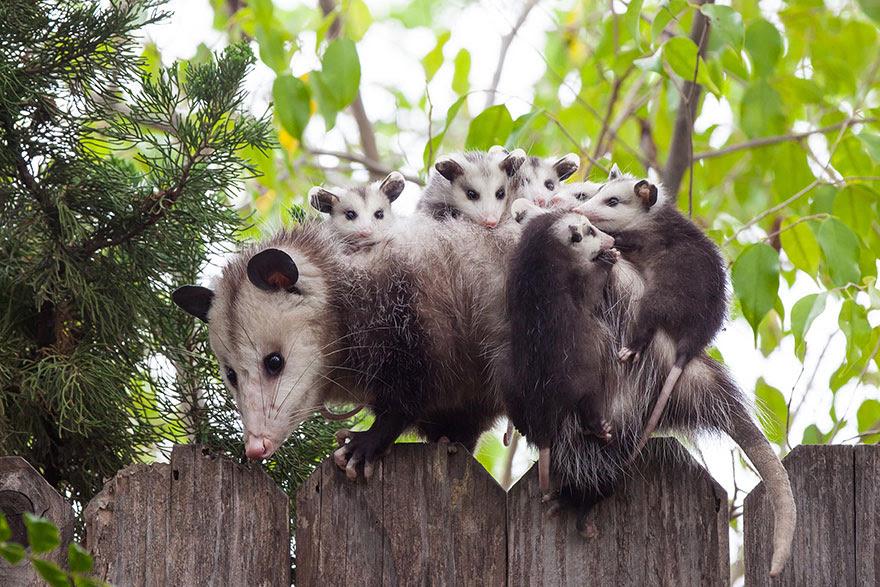 http://www.boredpanda.com/cute-animal-parenting/?image_id=animal-parents-1.jpg