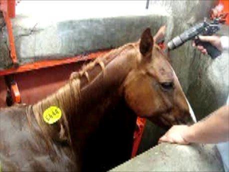 US mare in kill box
