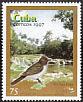 Giant Kingbird Tyrannus cubensis