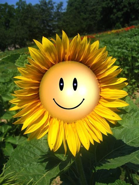 Free illustration: Sun Flower, Smile, Smiliey, Face   Free