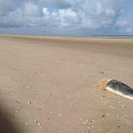 Ces cadavres qu'on scrute à la loupe en baie-de-Somme