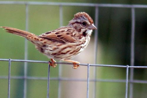bird 108