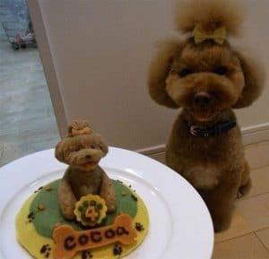 Pastel en imagenes de cumpleaños de mascotas