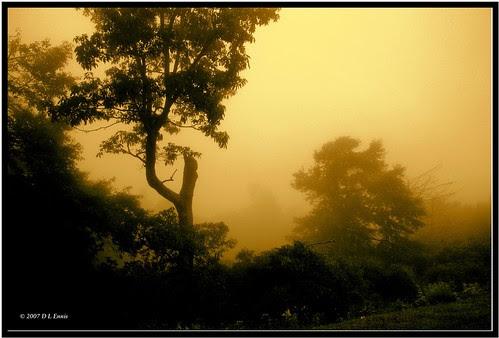 Wind and Fog