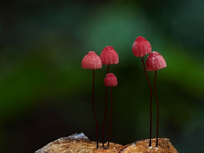 photos of mushrooms