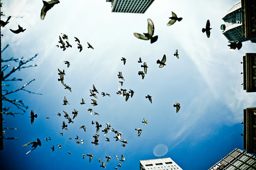 pigeonswarm por Andrew Morrell Photography
