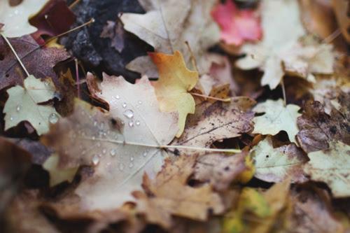 fall1 copy