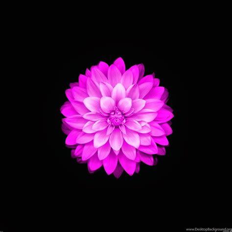 iphone ios flower wallpapers desktop background