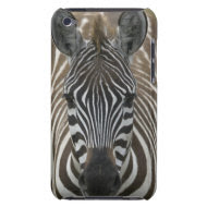 Common Zebra (Equus quagga), close up casemate_case