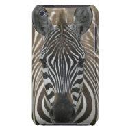 Common Zebra (Equus quagga), close up casemate_case