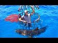 Este youtuber comprueba qué sangre atrae más a los tiburones