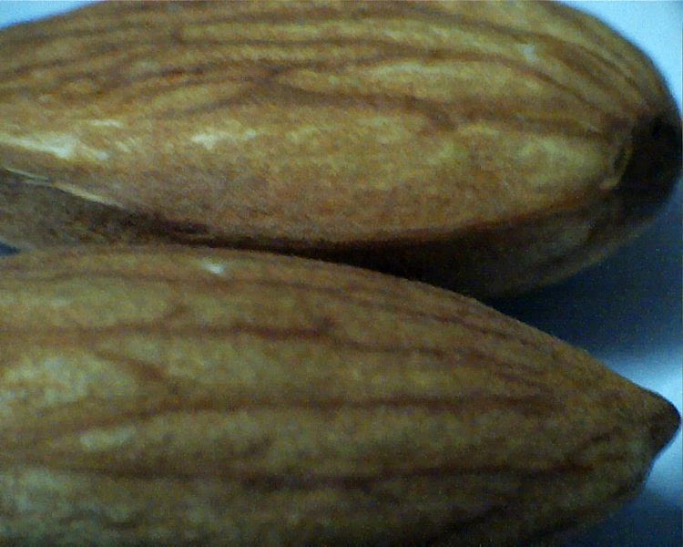 File:Almonds brown.jpg