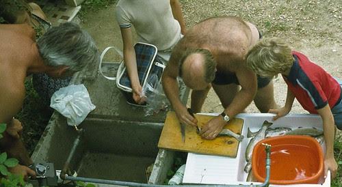 fishgutting