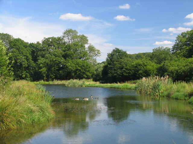 File:Pond near Selborne - geograph.org.uk - 628812.jpg