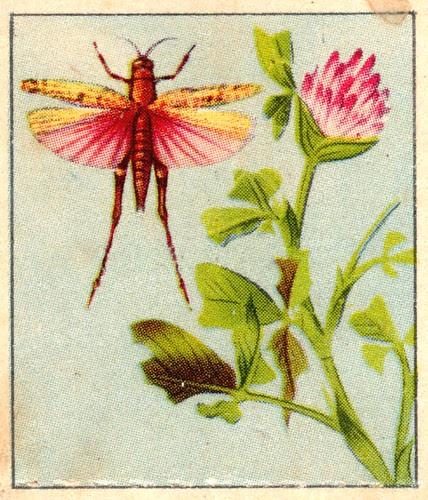 naturainsectes015