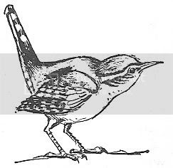 Scan_Pic0118.jpg bird_clipart picture by sarahjmorriss