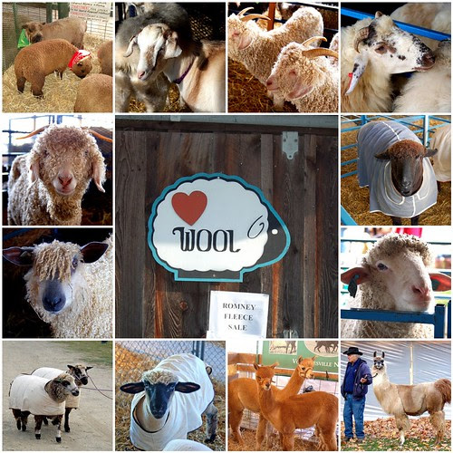 Sheep and llama and aplacas!