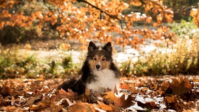 Los cuidados clave para el perro en otoño