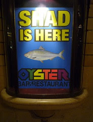 shad is here!
