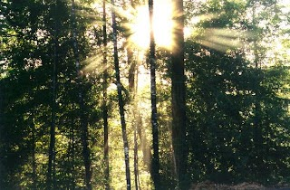 And the sun shines through.........